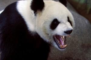 apprivoiser google panda